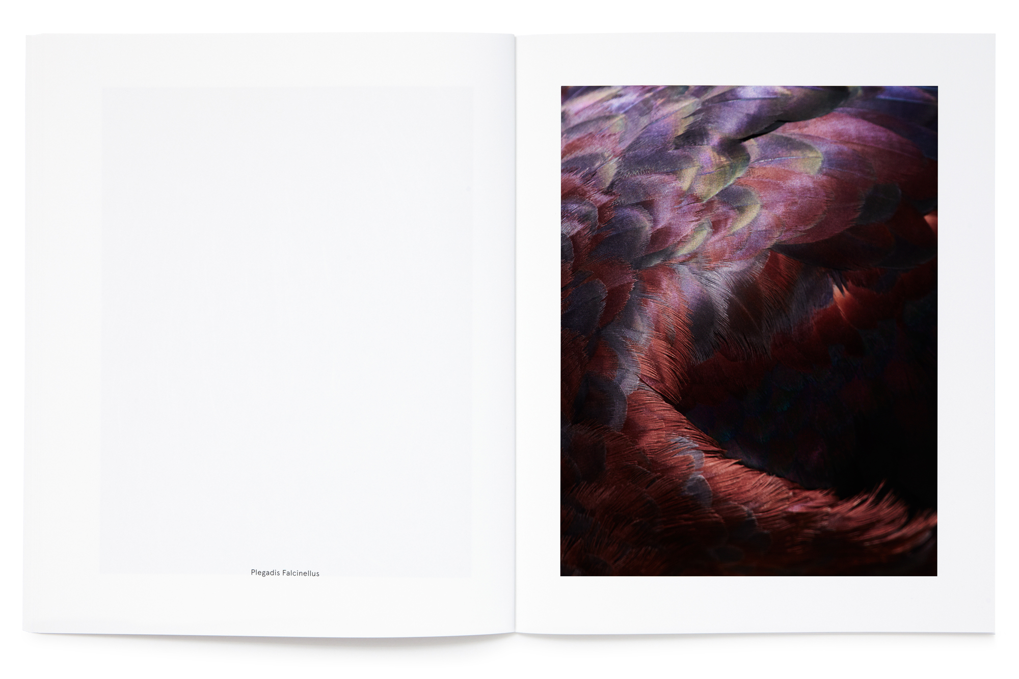 Daniel Baer – Birds&nbsp;&ndash; Publication. <i>Thomas&nbsp;Lohr</i>