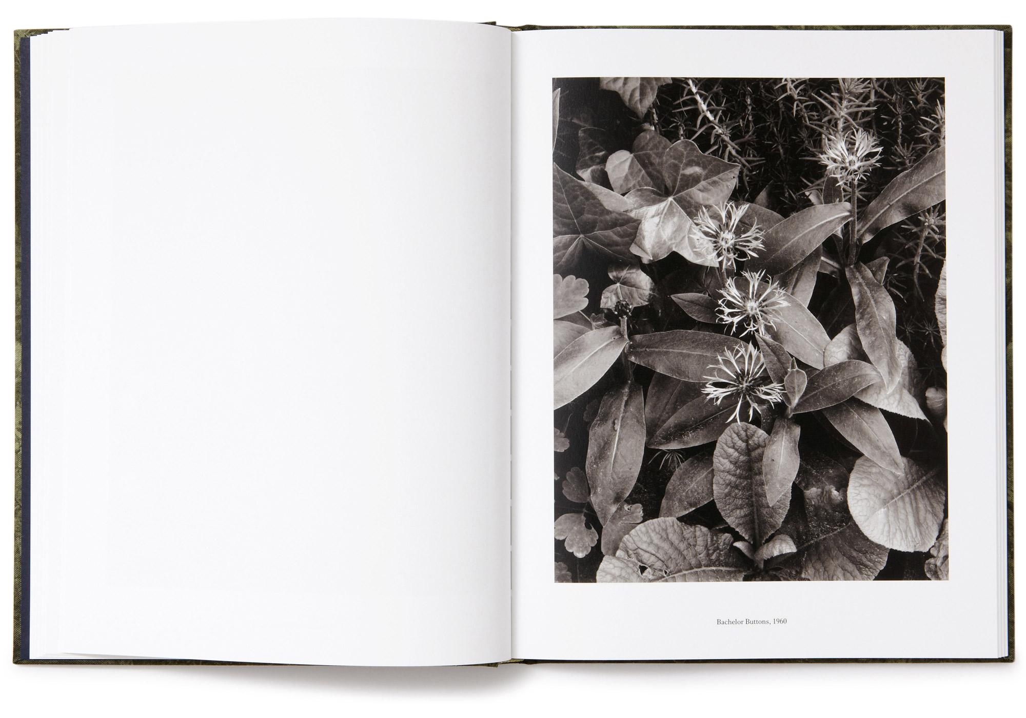 Paul strand book aperture foundation studio baer for Paul s garden studios