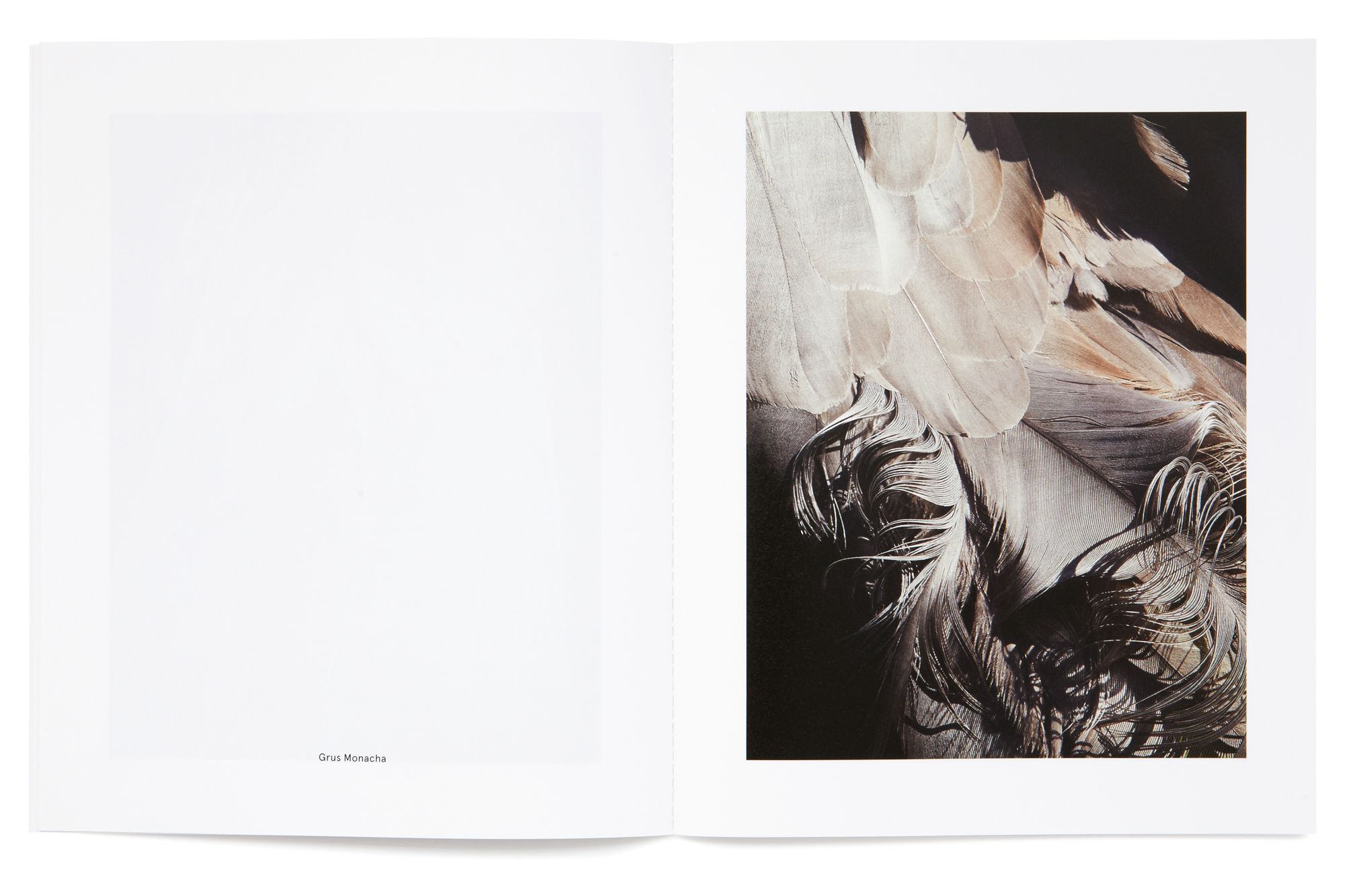 Daniel Baer – Birds – Publication. <i>Thomas Lohr</i> 9
