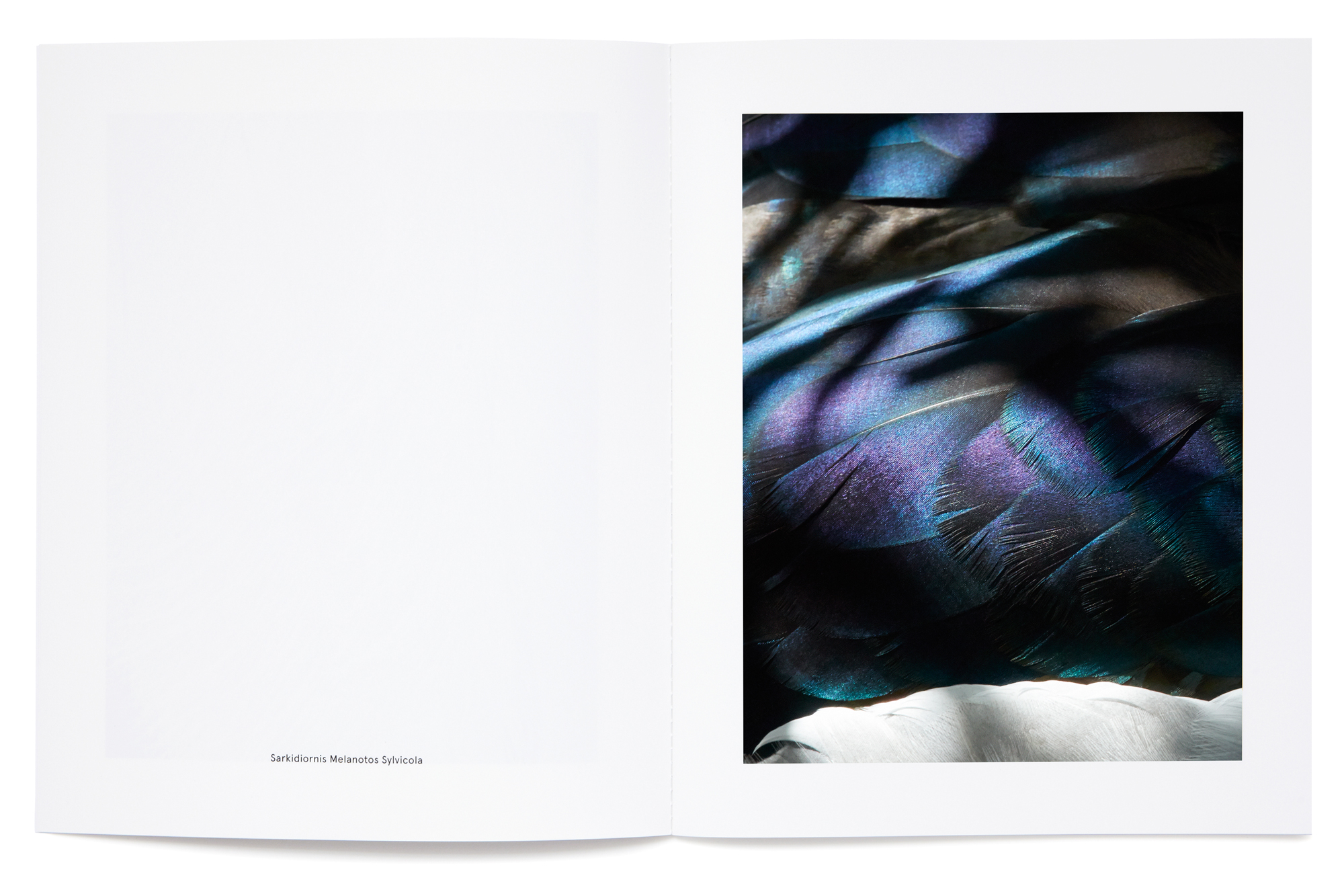 Daniel Baer – Birds – Publication. <i>Thomas Lohr</i> 5