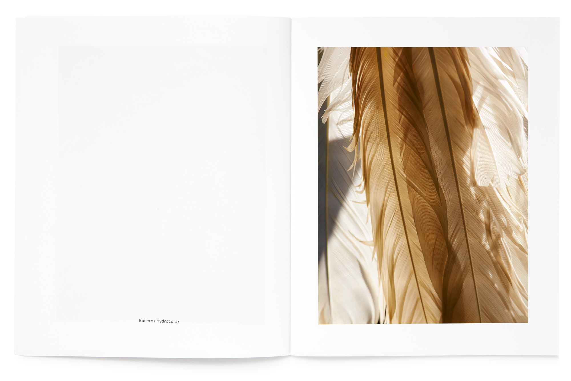 Daniel Baer – Birds – Publication. <i>Thomas Lohr</i> 11
