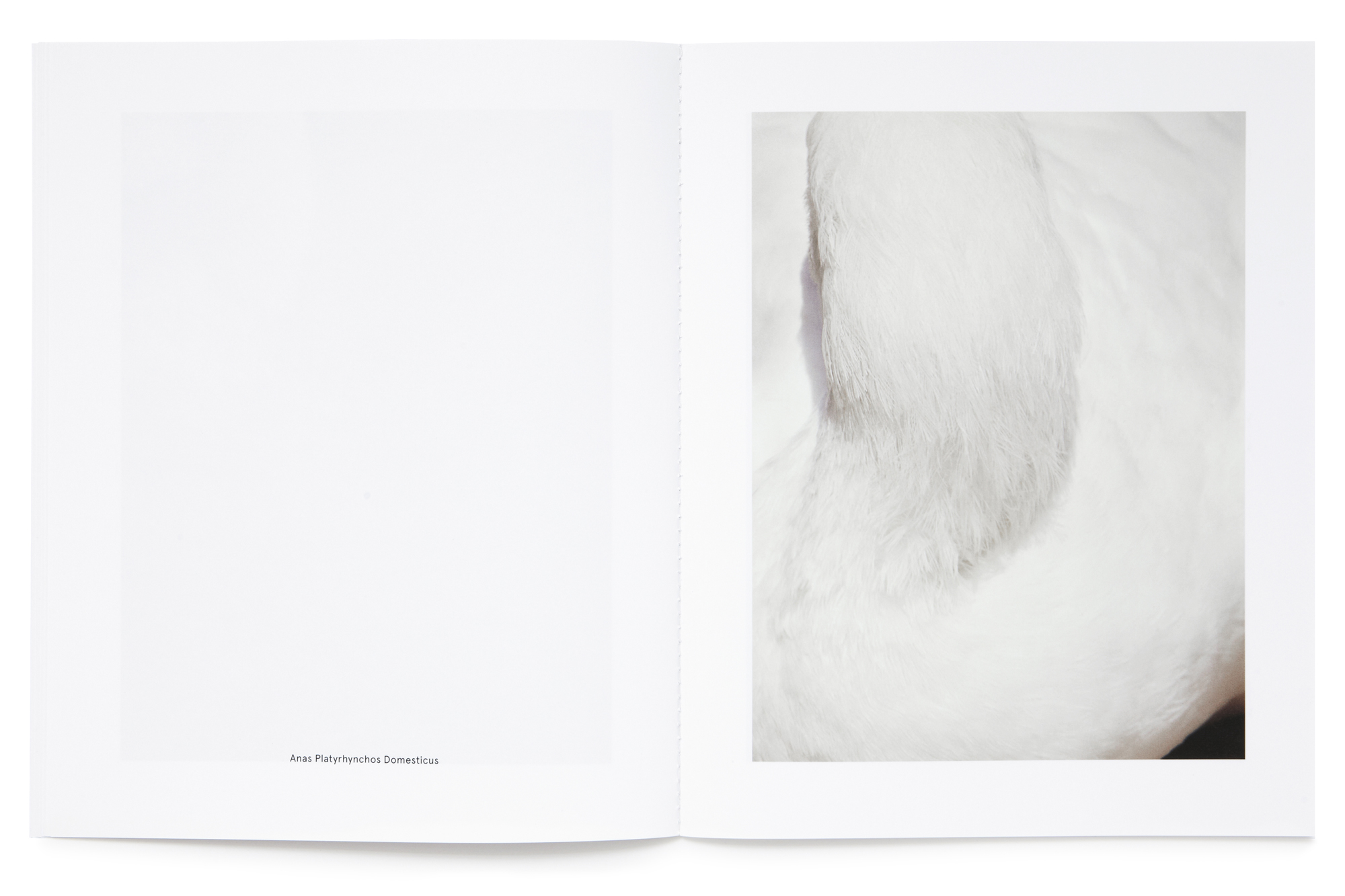 Daniel Baer – Birds – Publication. <i>Thomas Lohr</i> 10