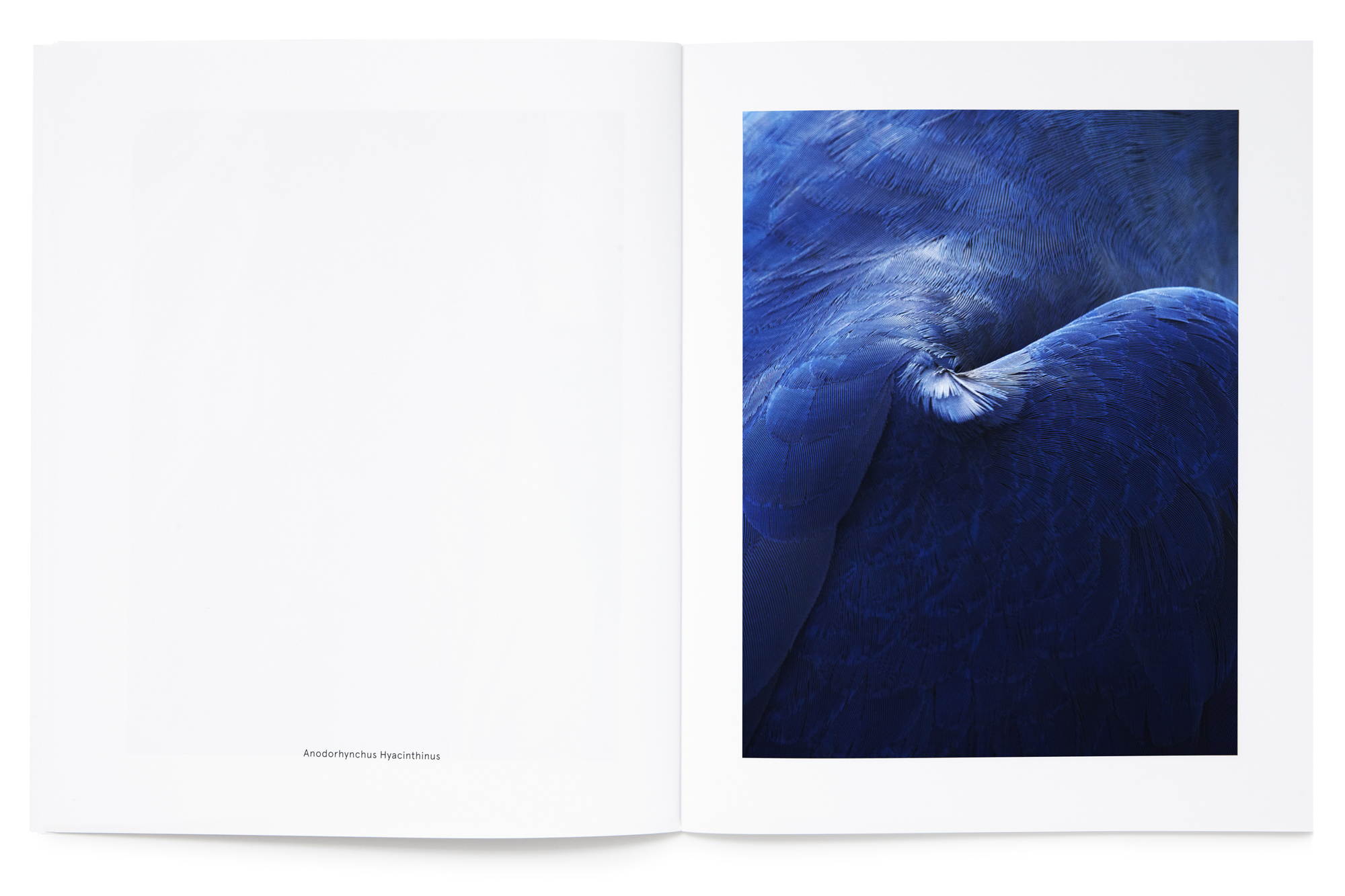Daniel Baer – Birds – Publication. <i>Thomas Lohr</i> 12