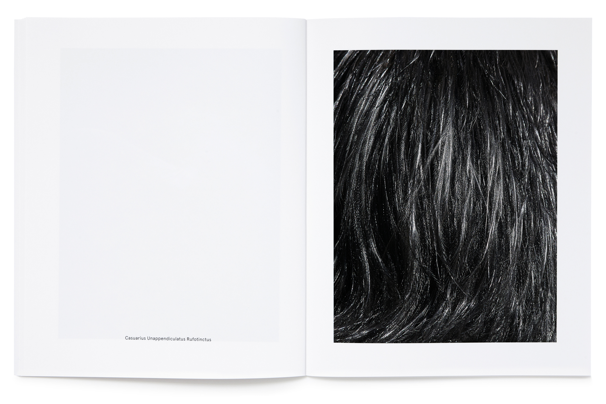 Daniel Baer – Birds – Publication. <i>Thomas Lohr</i> 13