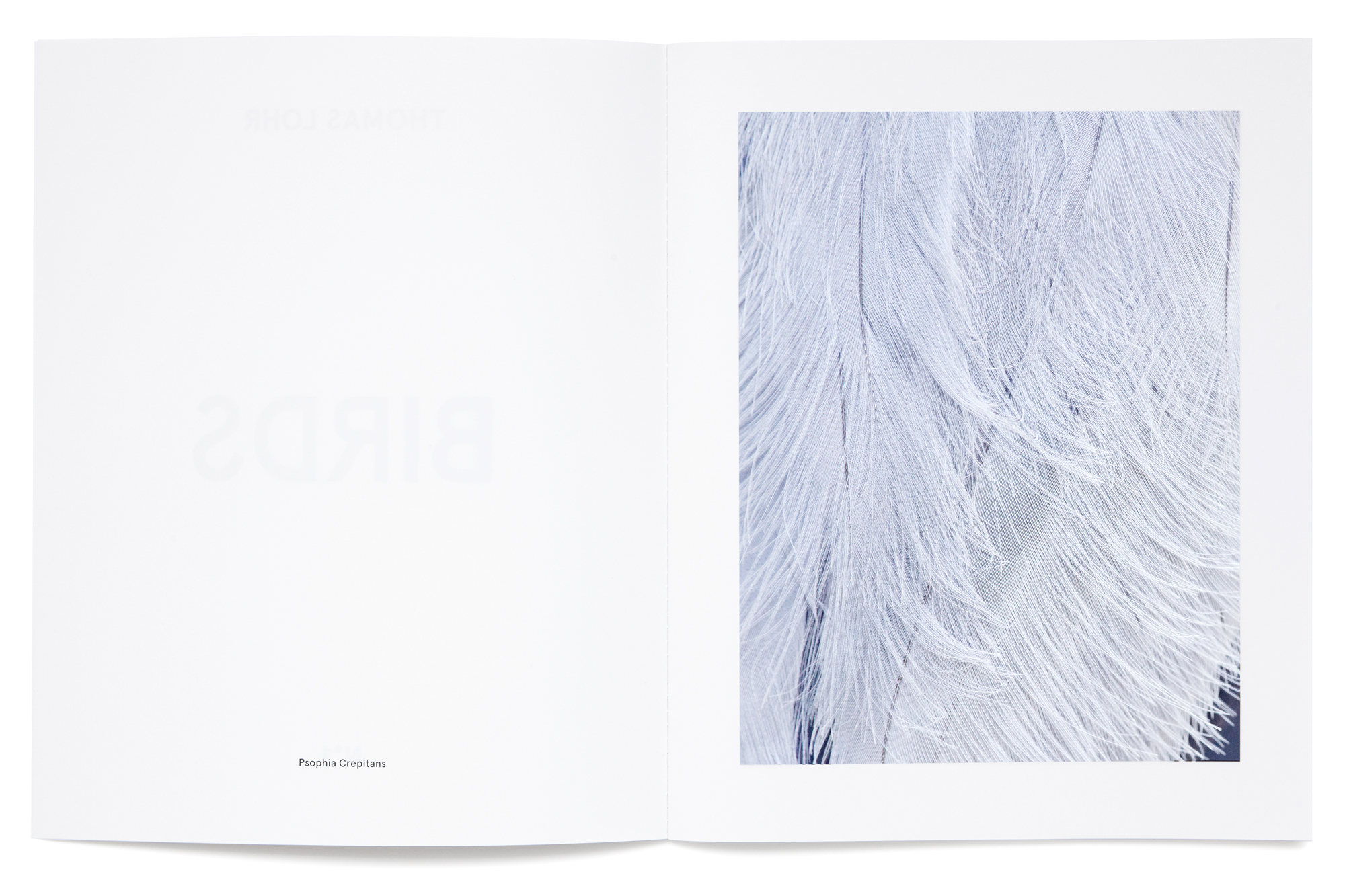 Daniel Baer – Birds – Publication. <i>Thomas Lohr</i> 4