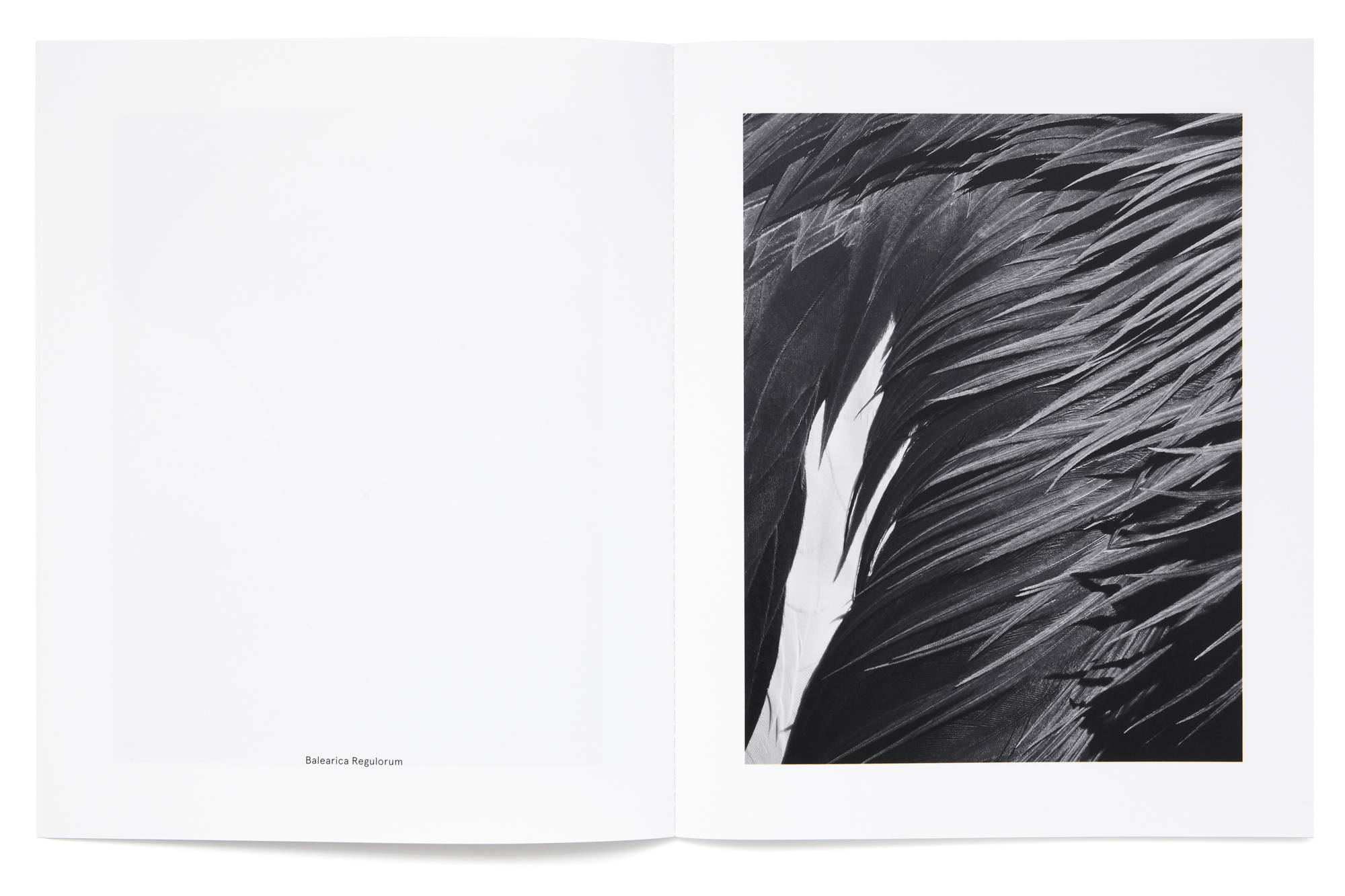 Daniel Baer – Birds – Publication. <i>Thomas Lohr</i> 7