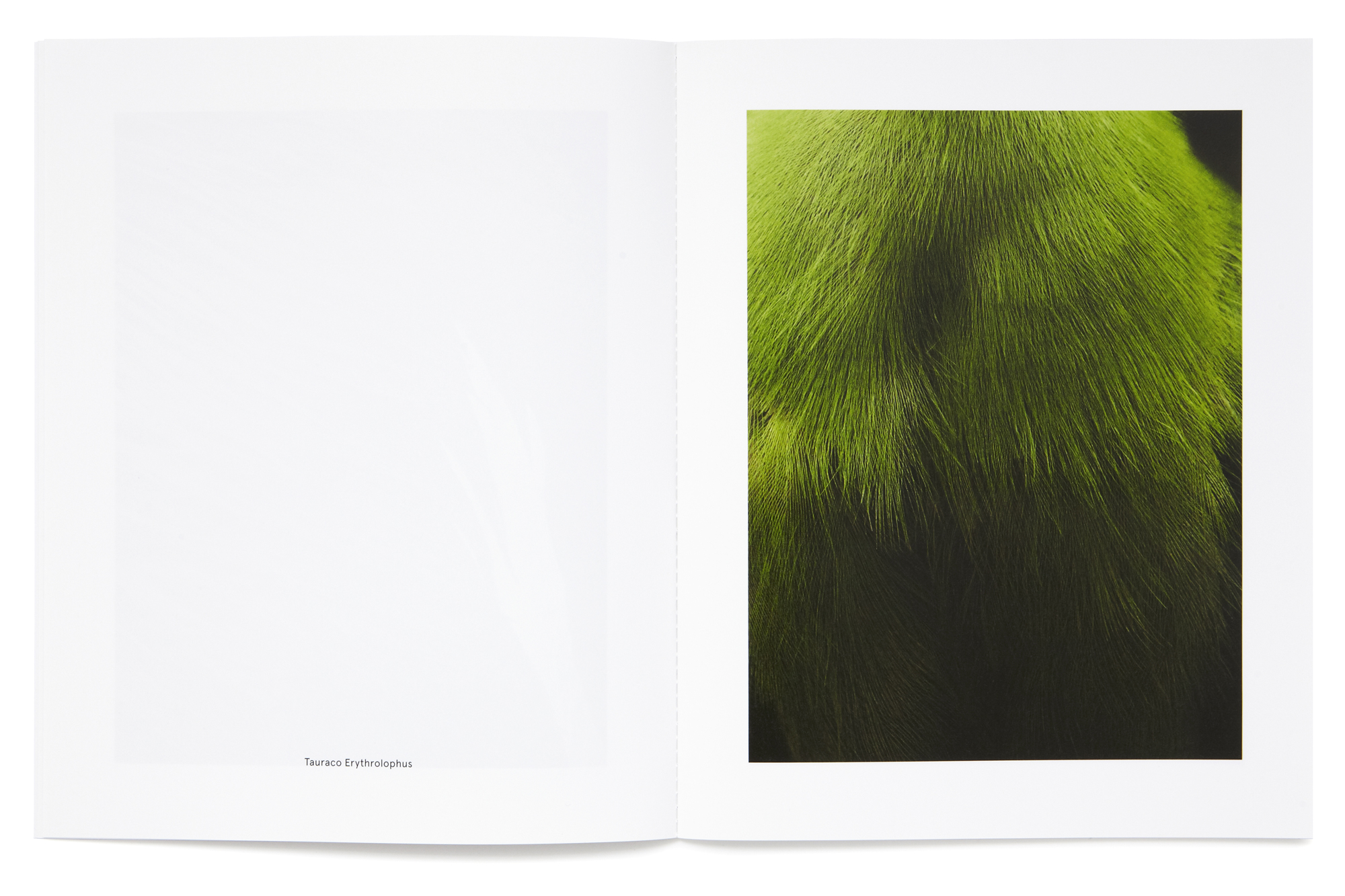 Daniel Baer – Birds – Publication. <i>Thomas Lohr</i> 8